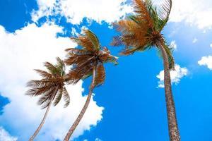 alberi di cocco sulla baia di maracas