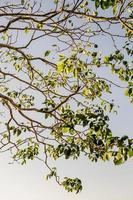 foglie verdi contro il cielo