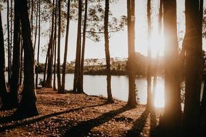 alberi vicino al lago