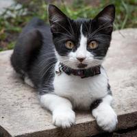 gattino con collare jingle bell