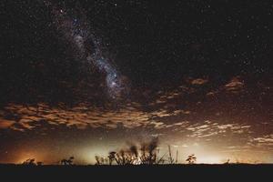 silhouette di piante sotto la notte stellata