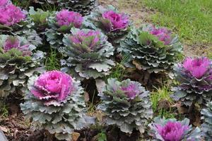 primo piano di piante viola