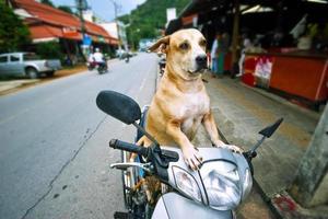 guidatore di cani foto