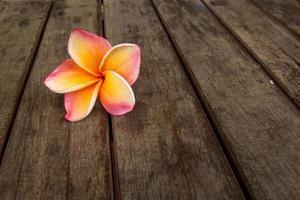 fiore di plumeria su pavimenti in legno