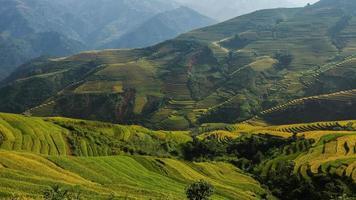 bellissime terrazze di riso, sud-est asiatico foto