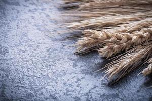 mazzo di spighe di grano dorato e segale vista ravvicinata foto