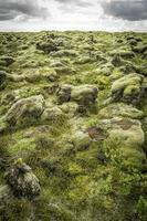 rocce e muschio