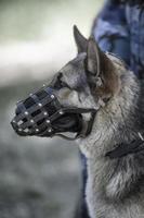 cane speciale in primo piano foto