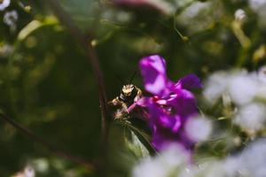 insetto sul fiore viola