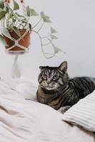 gatto soriano marrone sulla biancheria da letto