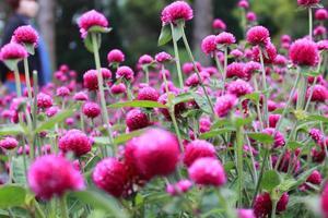 fiori di goccia di pioggia foto