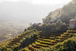 campo di riso e capanna di fattoria. Vietnam foto
