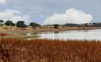 stagno in natura portogallo