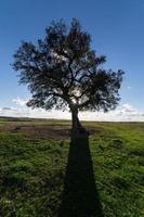 bellissimo paesaggio con un albero solitario, sole in controluce