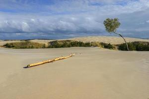 leba dunes - parco nazionale dell'unesco. luogo famoso in polonia.