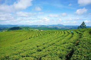 paesaggio impressionante, dalat, vietnam, piantagione di tè