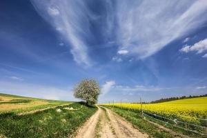 strada di campagna.