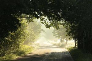 strada di campagna al mattino foto