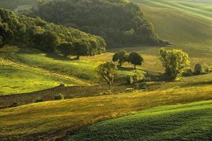 toscana - panorama del paesaggio, colline e prati, toscana - italia