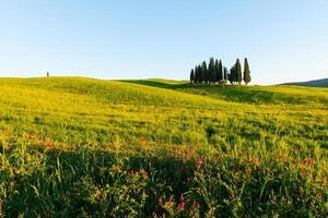 paesaggio toscano vicino a pienza, val d'orcia italia