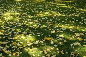 ombrellone e foglie