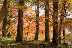 stagione delle foglie autunnali colorate in giappone