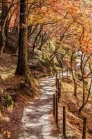 passerella con foglie colorate d'autunno