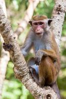 scimmia macaco toque foto