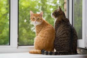 due gatto seduto sul davanzale della finestra foto