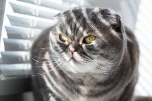 gatto. foto