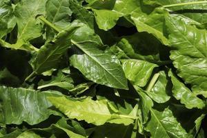 mazzo di foglie di spinaci foto