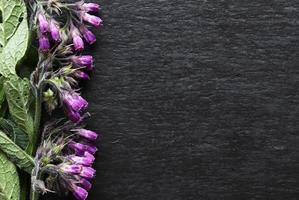 fotografia di fiori di consolida maggiore su sfondo di ardesia