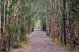 percorso della pista degli alberi