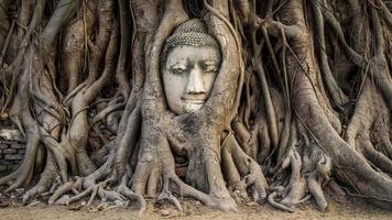 testa della statua del buddha nelle radici degli alberi, ayutthaya, thailandia