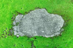 primo piano del bellissimo muschio verde brillante in giardino con pietre