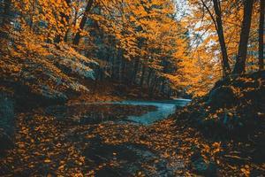 ruscello di foresta circondato da alberi di arancio vince l'autunno