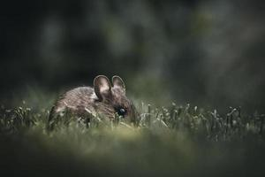 primo piano del mouse in erba