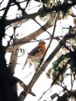 uccello marrone recuperato sul ramo di un albero