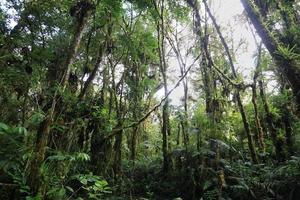 interno della foresta nuvolosa umida foto