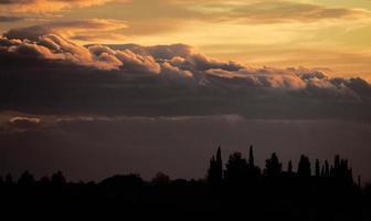 silhouette di alberi sotto il cielo al tramonto