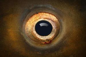 occhio di pesce. foto