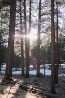 alberi marroni al sole vicino allo specchio d'acqua durante il giorno