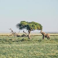 elefante con la proboscide alzata