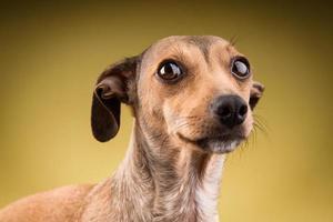 ritratto del primo piano della faccia del cane