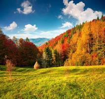 colorato paesaggio autunnale nelle montagne dei carpazi