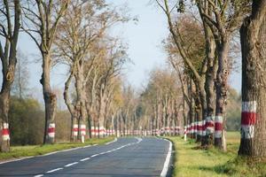 strada curva tra gli alberi