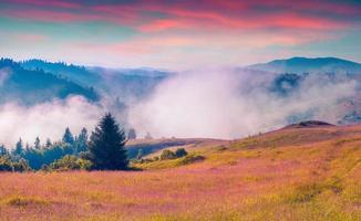 nebbiosa mattina d'estate nelle montagne dei Carpazi.