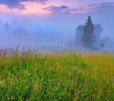 nebbiosa mattina d'estate in montagna.