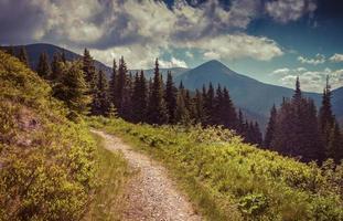 colorato paesaggio estivo in montagna