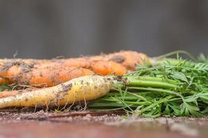 primo piano di carote appena raccolte
